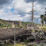 Etna / Coulée de lave et arbres morts