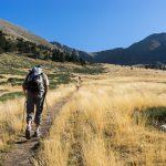Un air de savane dans la montée au Canigou