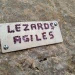 Les Lézards Agiles au Mont Linla